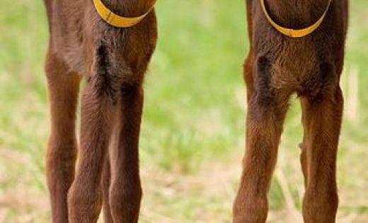 Baby moose. Love those gangly long legs. Little cuties. | Robyn Porter,