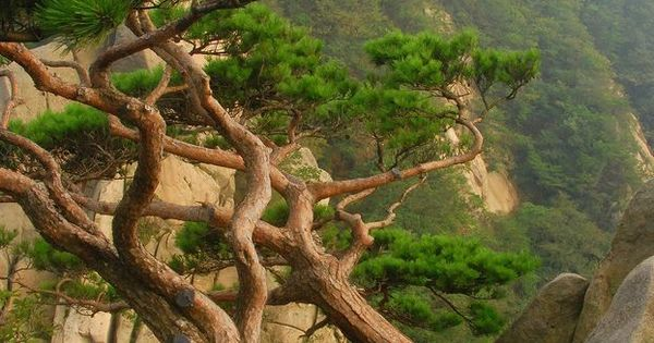Beautiful Trees at Bukhansan National Park, South Korea