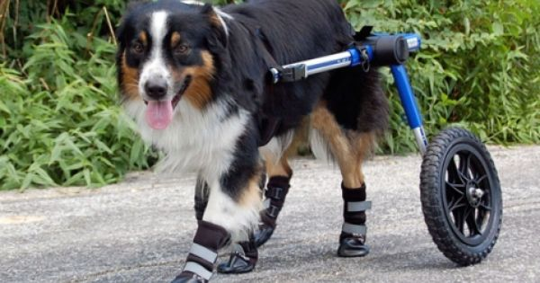 Dog Boots Walkin Pet Boots Dog Shoes Dog Wheelchair Dog Boots Dogs
