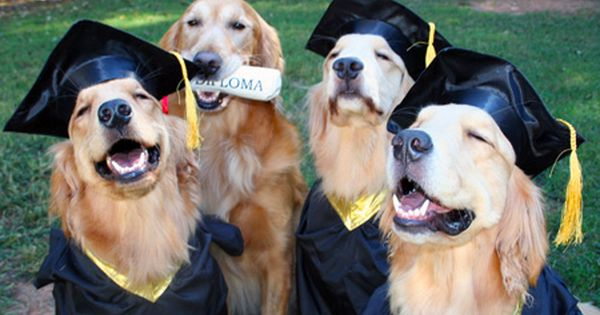 And They Were So Proud When You Graduated Funny Animals