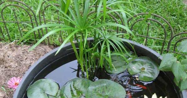 Jardin aquatique en pot -une petite oasis à mettre au balcon  Design ...