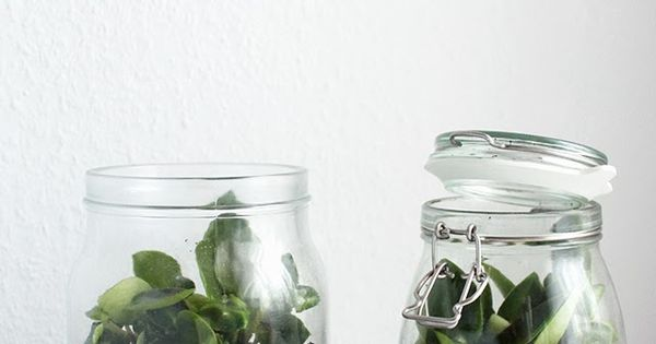diy terrarium kleiner garten im glas diy einfach selber machen pinterest diy terrarium. Black Bedroom Furniture Sets. Home Design Ideas