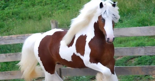 Clydesdale Horse: Beautiful Horses, Pretty Hors, Gypsy Watering, Beautiful Animal, Watering