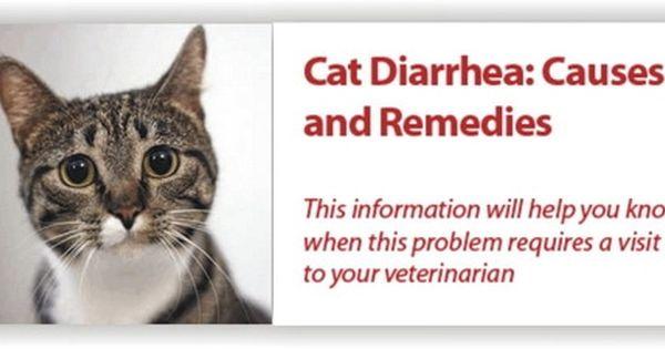 Cat Diarrhea Causes Remedies How To Treat Cat Diarrhea Cat Diarrhea Why Do Cats Purr Cats