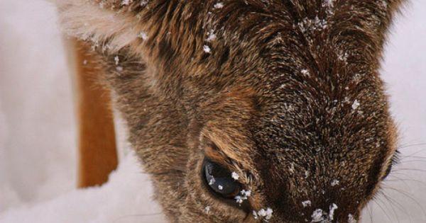 Deer in a winter wonderland.