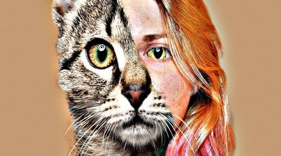 person to animal metam...