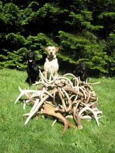 Welcome To The North Idaho Antler Dogs Website Where We