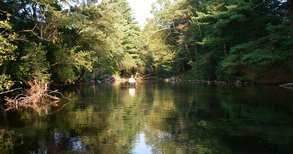 A great place to kayak swift river belchertown ma for Swift river fly fishing