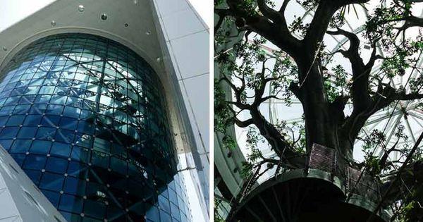 Green Planet Dubai Dubai Tropical Rainforest Biodome