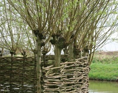 "Here's a ""grow-your-own fence"" - the pollarded willows not only supply the"