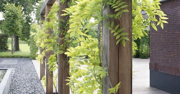 Net als zeeland blauwe regen en hibiscus tuin pinterest madeira blauweregen en decks - Wijnstokken pergola ...