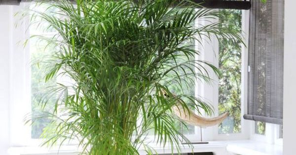 The best low maintenance indoor plants low maintenance for Best low maintenance plants