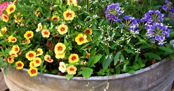 outdoor flower containers | This galvanized old pot contains four types of