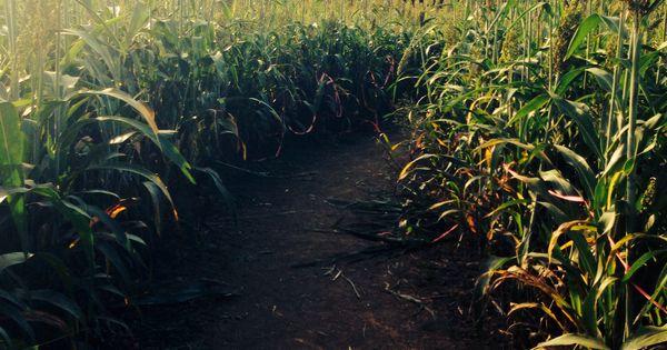 Corn maze? or farmer's market? | Date ideas with Anisa ...