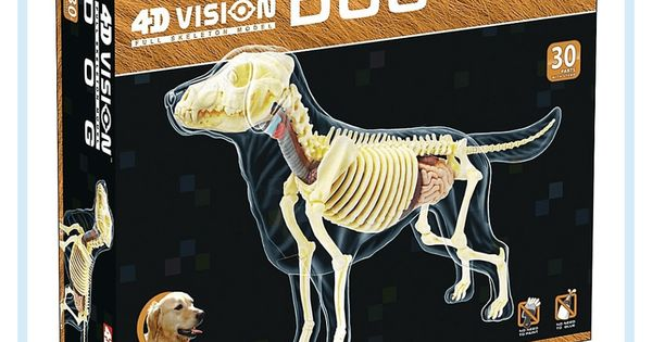 4d Master 4d Vision Full Skeleton Dog Model Dog Skeleton Dog Modeling Skeleton Anatomy
