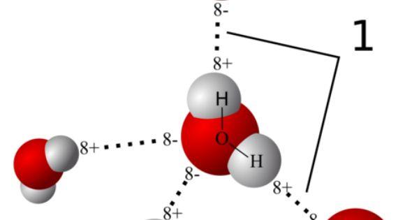 model of hydrogen bonds 1 between molecules of water