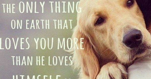 A Dog love quotes life quotes quotes animals quote dogs ...