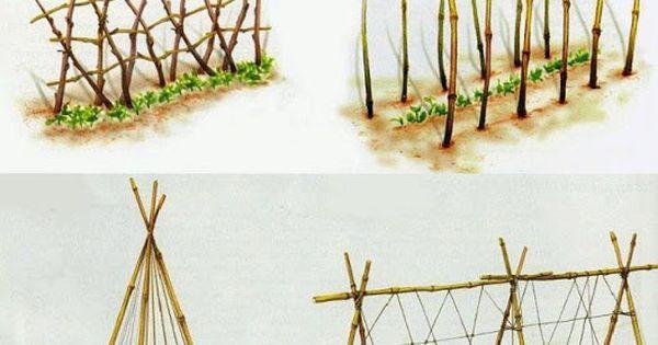 Plantes exemple de treillis pour grimpants jardin - Faire pousser du bambou ...