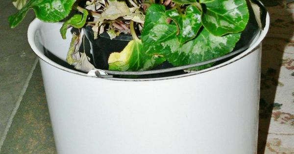 Vintage Enamel White Pail Bucket Garden Planter Wire Handle Etsy Bucket Gardening Pail Bucket Planting Flowers