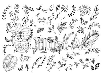 手書き葉っぱ色々 イラスト 植物イラスト 花 フレーム