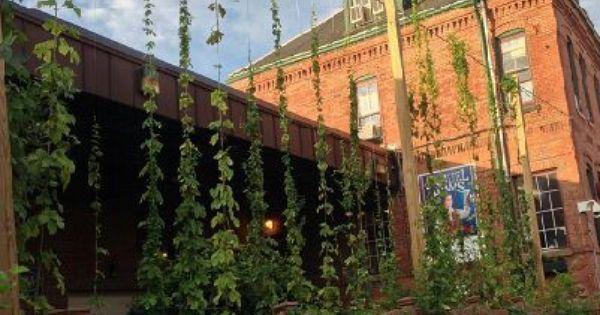 fff9be042d91cf0d46c2a1c0441c319d - Best Beer Gardens In Chicago Suburbs
