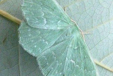 Camouflage Nature Naturephotography Camouflageinnature Moth Insect Camouflageinsect Camouflage Wildl Schone Schmetterlinge Schmetterling Nachtfalter