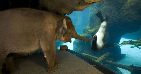 Baby elephant making new friends at an Oregon zoo!