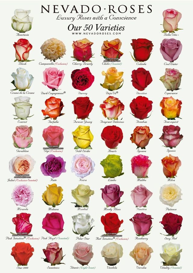 Невероятные сорта роз, которые так и просятся в сад