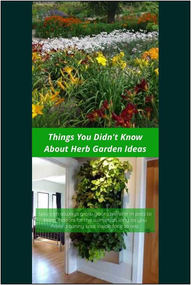 Learn About Successful Suggestions To Productive Horticulture Herb