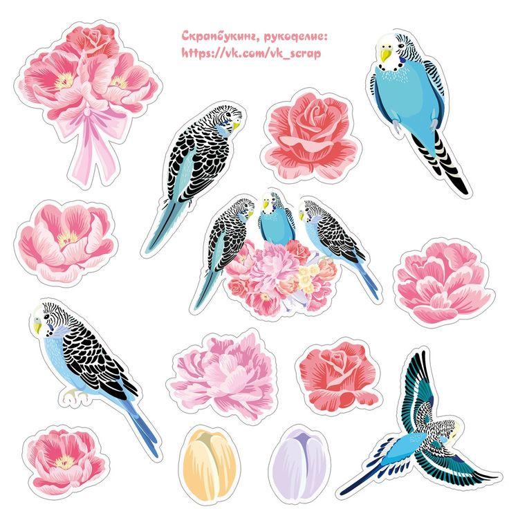 попугаи, высечки