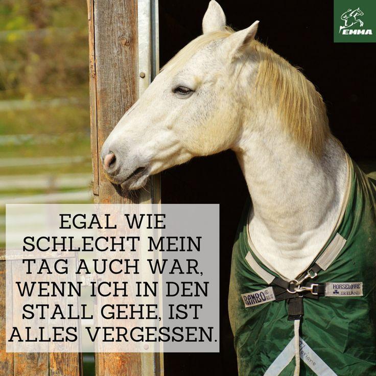 Besuche uns www.emma-pferdefuttershop.de | Pferdesprüche ...