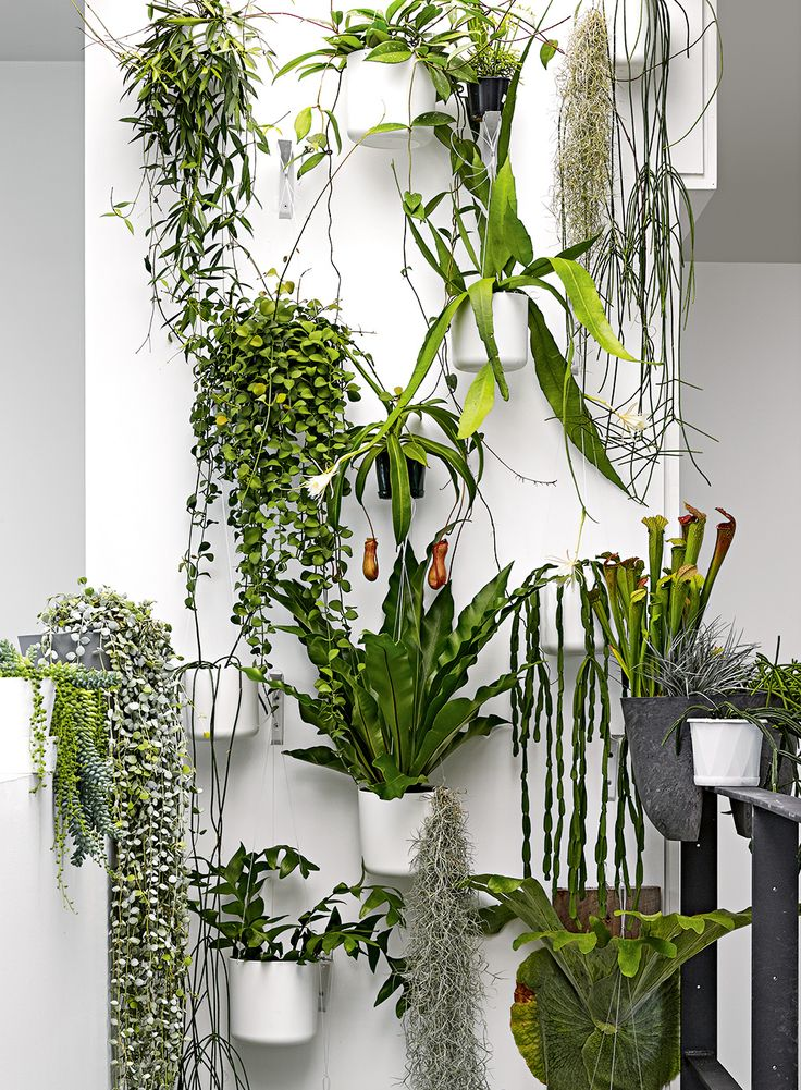 How to create a stunning garden wall. Styling by Deb McLean. Photography by Colin Doswell.