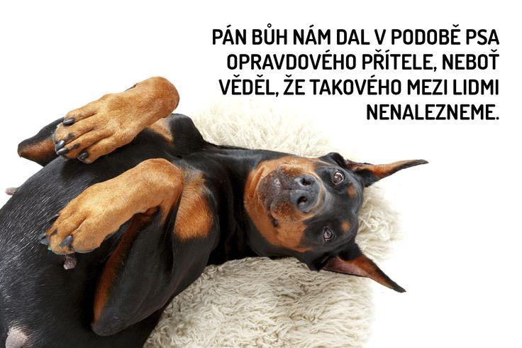 Nejkrásnější citáty o psech