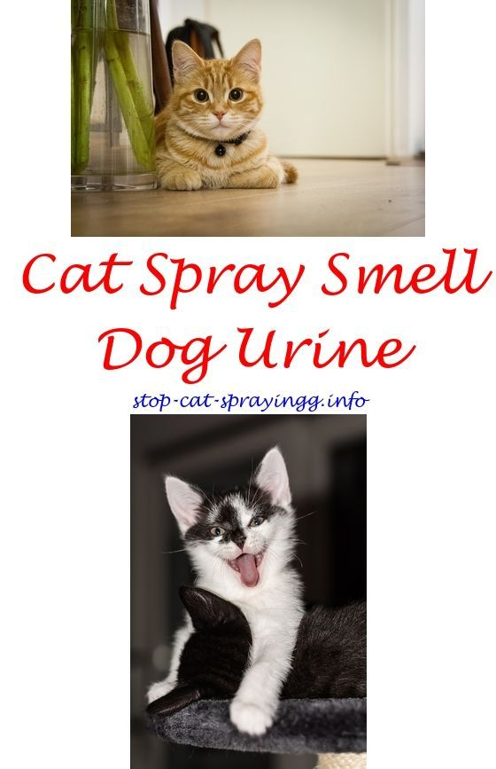 Natural chemistry flea and tick spray for cats.Homemade pheromone spray for cats.Liter pan for cats that spray - How To Stop Cat Spraying?