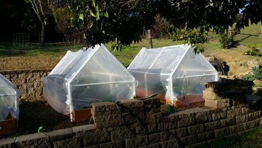 Greenhouse on the cheap!