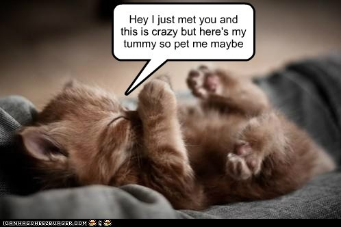 Hey I just met you and this is crazy but here's my tummy so pet me maybe