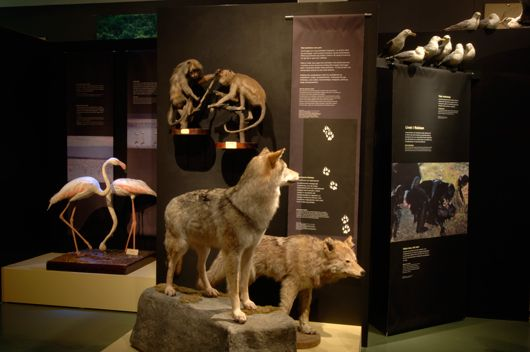 Naturhistoriska riksmuseet. genusperspektiv02.jpg (530×352)