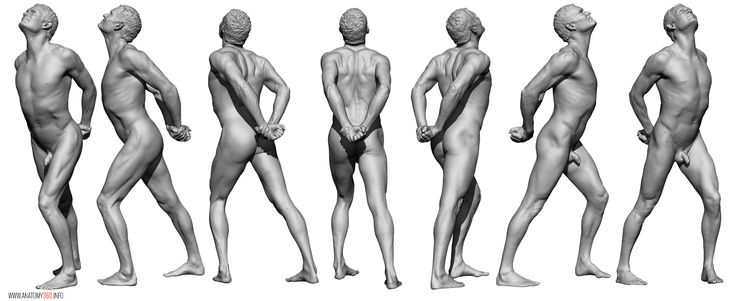 AnatomyReference_04.jpg (2283×935)