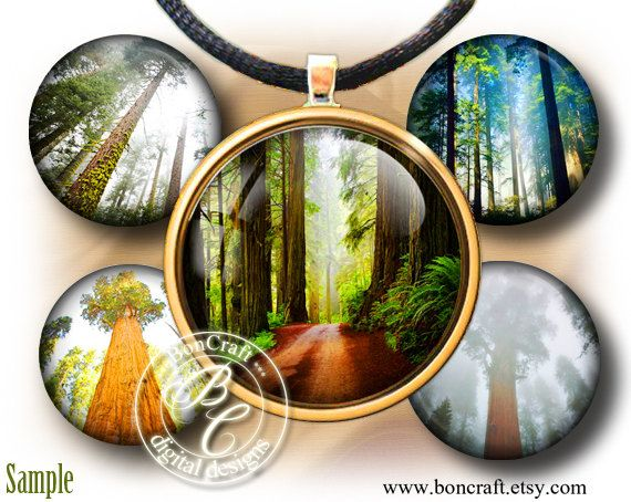 "Sequoia sempervirens (Wild Gigant American Forest) - Digital bottle cap images - 1'' circles, 25mm, 30mm, 1.25"", 1.5"" for Jewelry Making by BonCraft on Etsy"