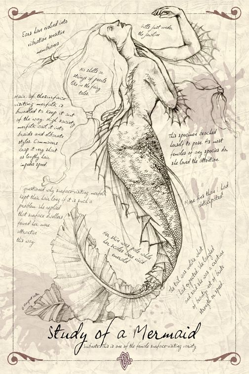 A Study of a Mermaid by ~MAReiach Skizzenbuch, Artist Study with thanks to Artist Diana Koehne , Sketching the Human Figure, Sketching Faces, Sketching Portrait Ideas Resources for Art Students at milliande.com, Art School Portfolio Work
