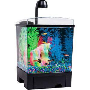 79 Best Aquarium Fish Images On Pinterest Aquarium Fish