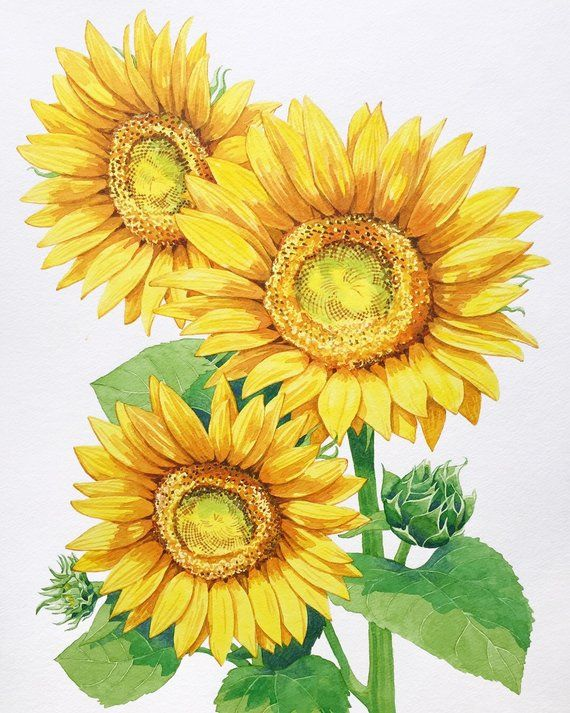 Original Sunflower Watercolor Painting Summer Home Decor