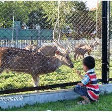 http://www.medaners.com/2014/01/kebun-binatang-usu-tempat-asik-buat.html
