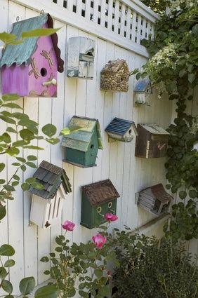on a wall or #fence - #birdcage/#birdhouse