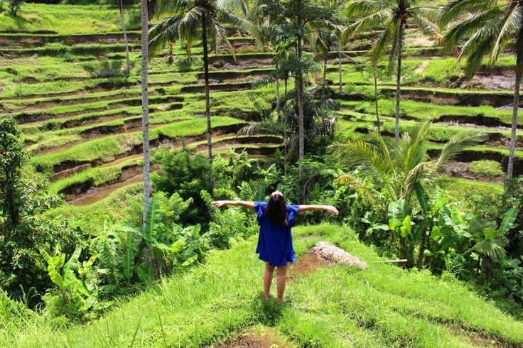 Tallalang Rice Terraces, Bali, Indonesia
