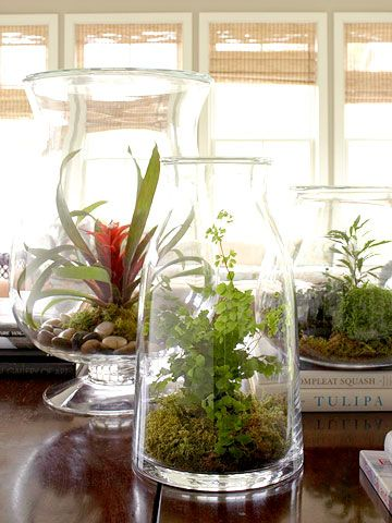 Making a big come back are terrariums in beautiful carafes and vases.