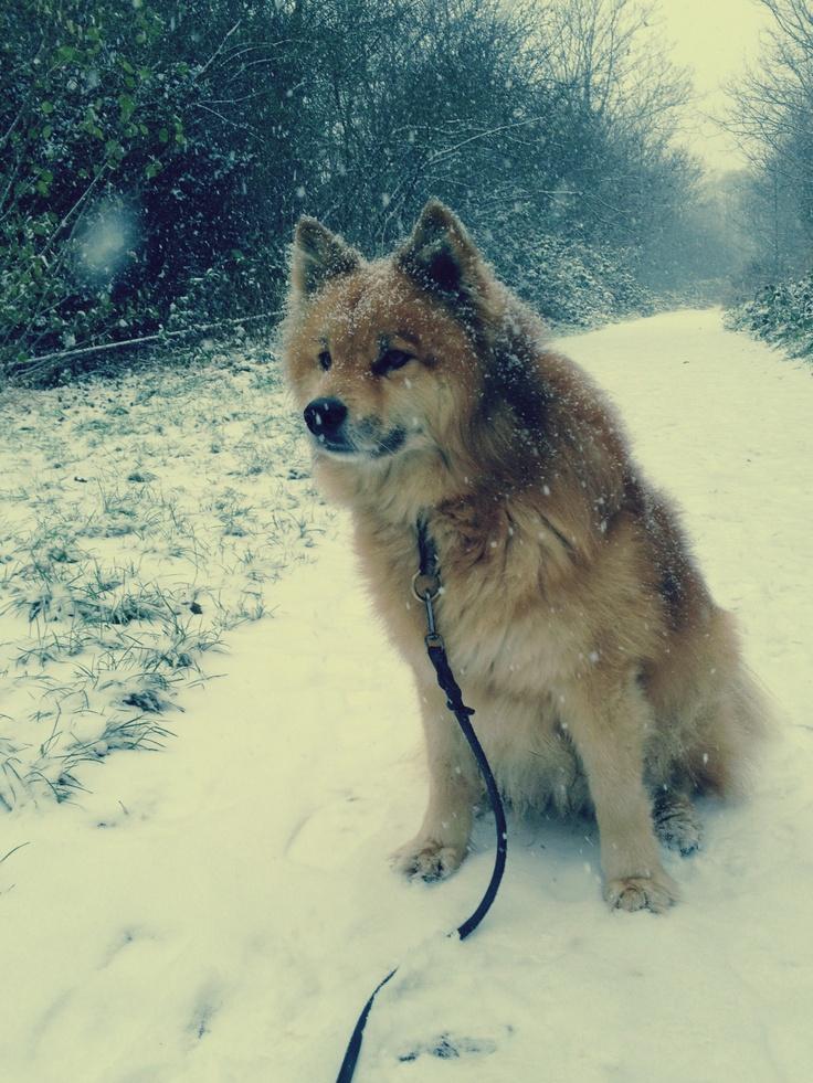 #London #Finsbury Park #Dog