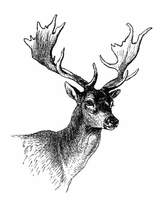 черно белые картинки благородного оленя шорты