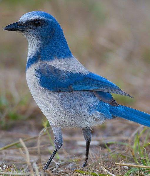 1513 Best Images About Amazing Birds On Pinterest
