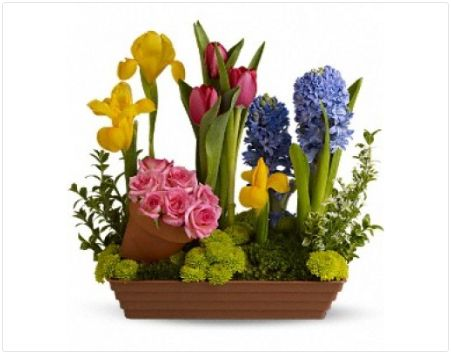 FDH #Spring_Favorites_Flowers :- With beautiful #Blossoms like this, is it any wonder that spring is the favorite season of so many?